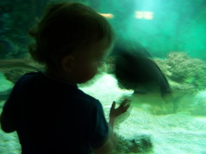 Vannes Aquarium