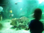 The blur of Mr Toddler as he darts about shouting WOW - Vannes aquarium