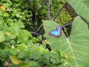 Vannes Butterfly Garden