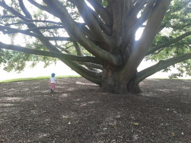 Tiny Tot. Tall Tree.