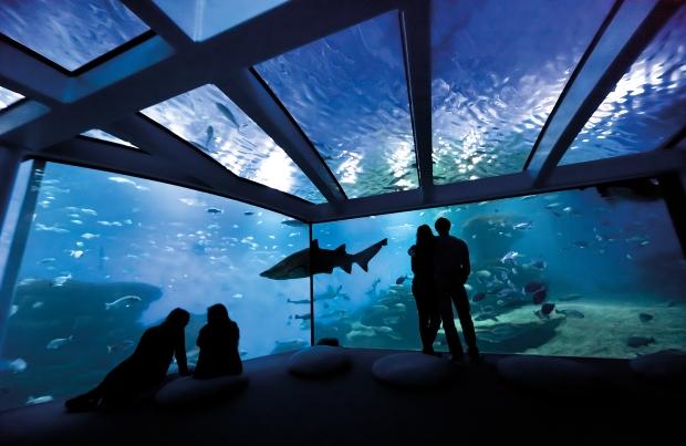 Big-Blue-Palma-Aquarium