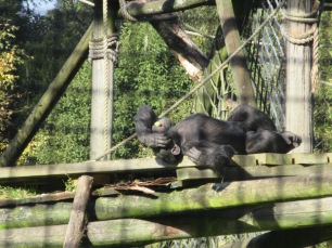 Set sail for a very relaxed Chimp Island