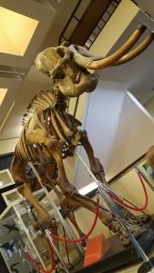zoology-elephant